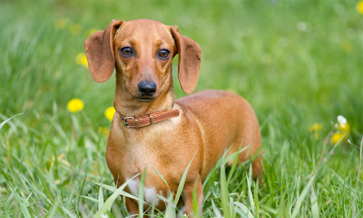 Quiz Disk Disease In Dogs Cats