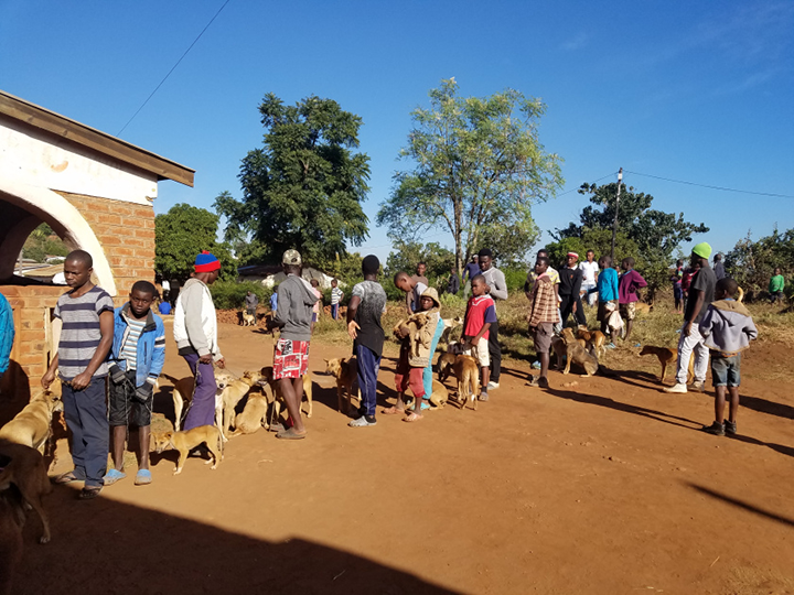 The line at one of the static clinics in Zomba. Hundreds of people line up each day to have their animals vaccinated.