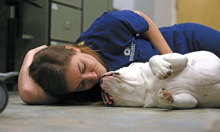Veterinary Nursing in Action