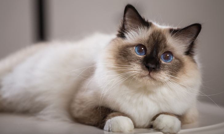 Top 5 Causes of Eosinophilia in Cats