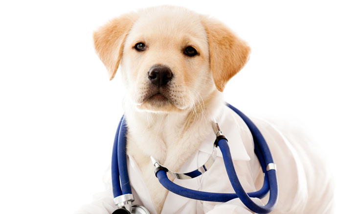 Add Boarding To Your Veterinary Practice!