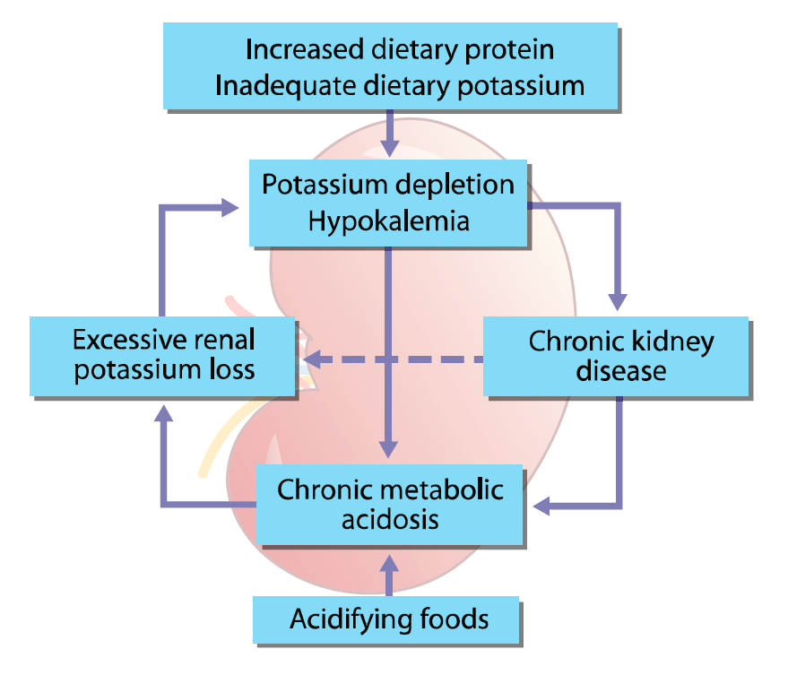 Chronic Kidney Disease Part 3 Management Clinician S Brief