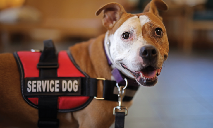 Special Considerations for Special Patients: Service Dogs
