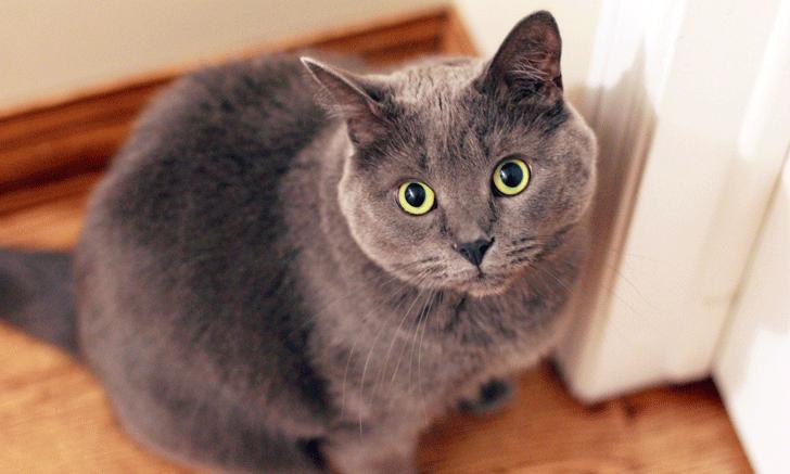Chapter 46, Part 2: Nutritional Factors for Feline Lower