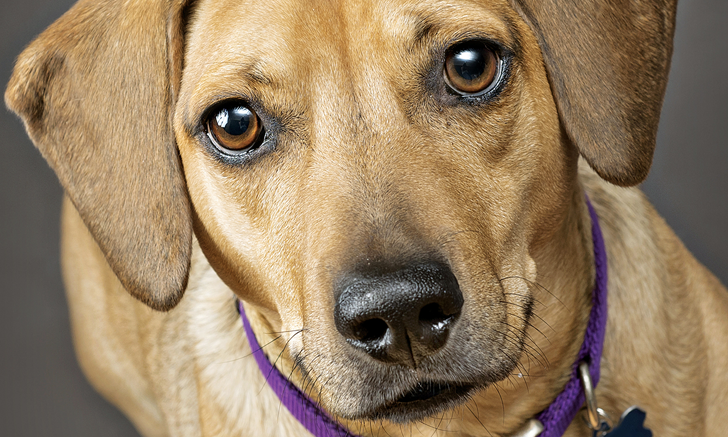 Canine Aggression During Veterinary Examination