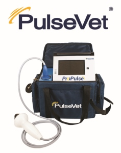 Focused High Energy Veterinary Shock Wave Therapy