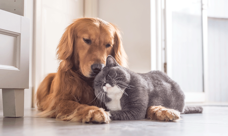 Age of Neutering in Cats & Dogs: When Is Best?