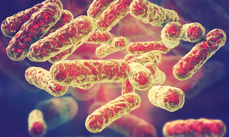 Top 5 <em>Bartonella</em> Species of Human Significance
