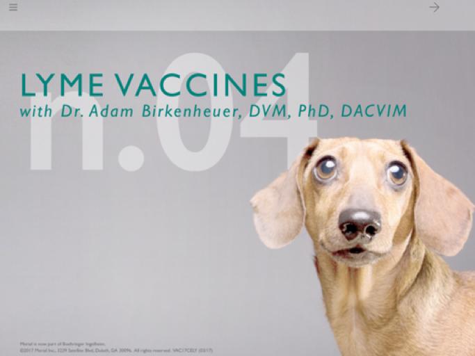 Lyme Vaccines
