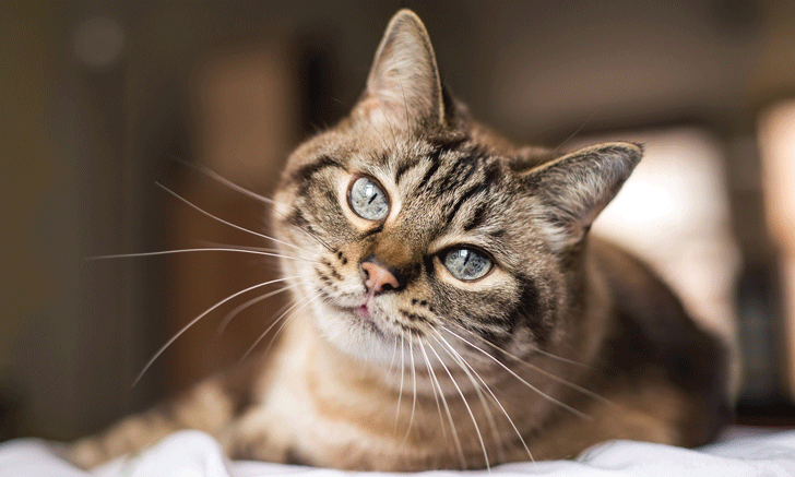 Finding Hope for Relinquished Cats with Lower Urinary Tract Disease