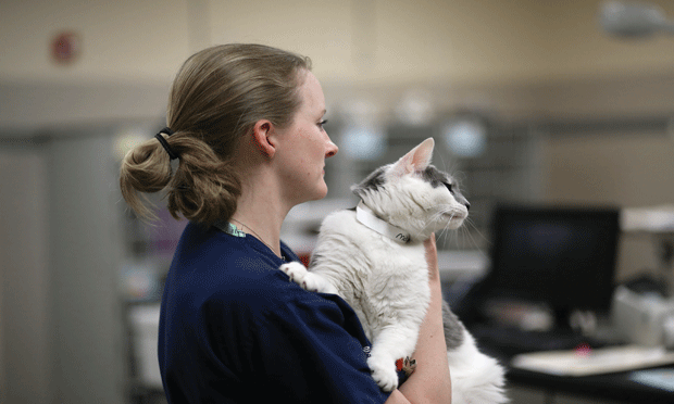 Top 10 Influences of COVID-19 on Human & Veterinary Medicine