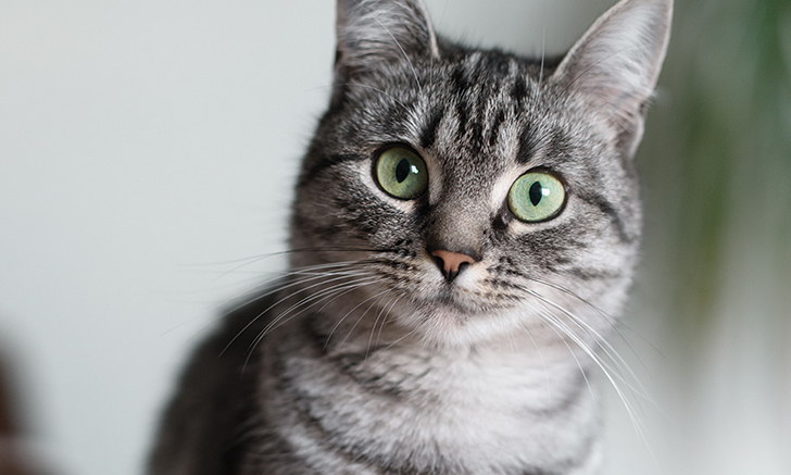 Changing the Outlook for Feline Chronic Kidney Disease