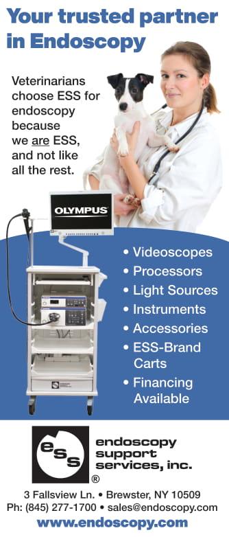 Endoscopy CB August 2020