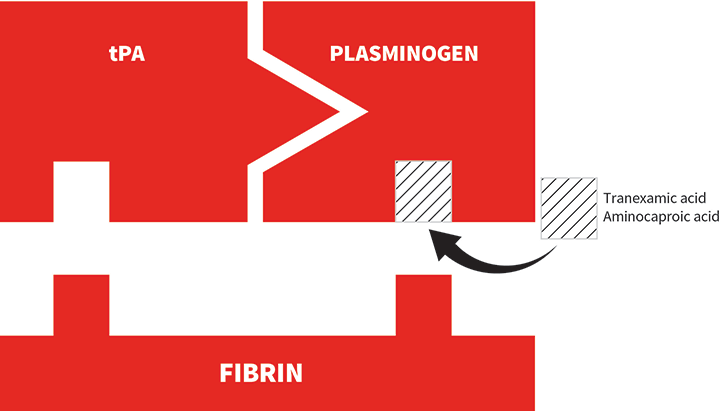 Tranexamic acid and aminocaproic acid are fibrinolytic inhibitors with similar mechanisms of action. These drugs are lysine analogs that prevent activation of plasminogen to plasmin by blocking the C-terminal lysine binding site of plasminogen, thereby preventing fibrinolysis.