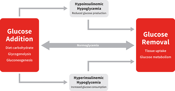Normoglycemia represents balance between glucose addition and removal from the blood. Hypoglycemia results when the rate of glucose addition falls below the removal rate (ie, hypoinsulinemic hypoglycemia) or when the rate of removal exceeds the addition rate (ie, hyperinsulinemic hypoglycemia).