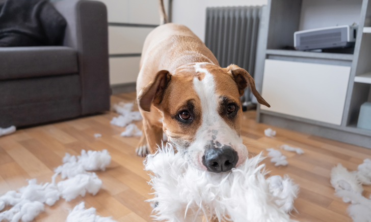 Separation Anxiety in a Dog with Fear-Based Behavior