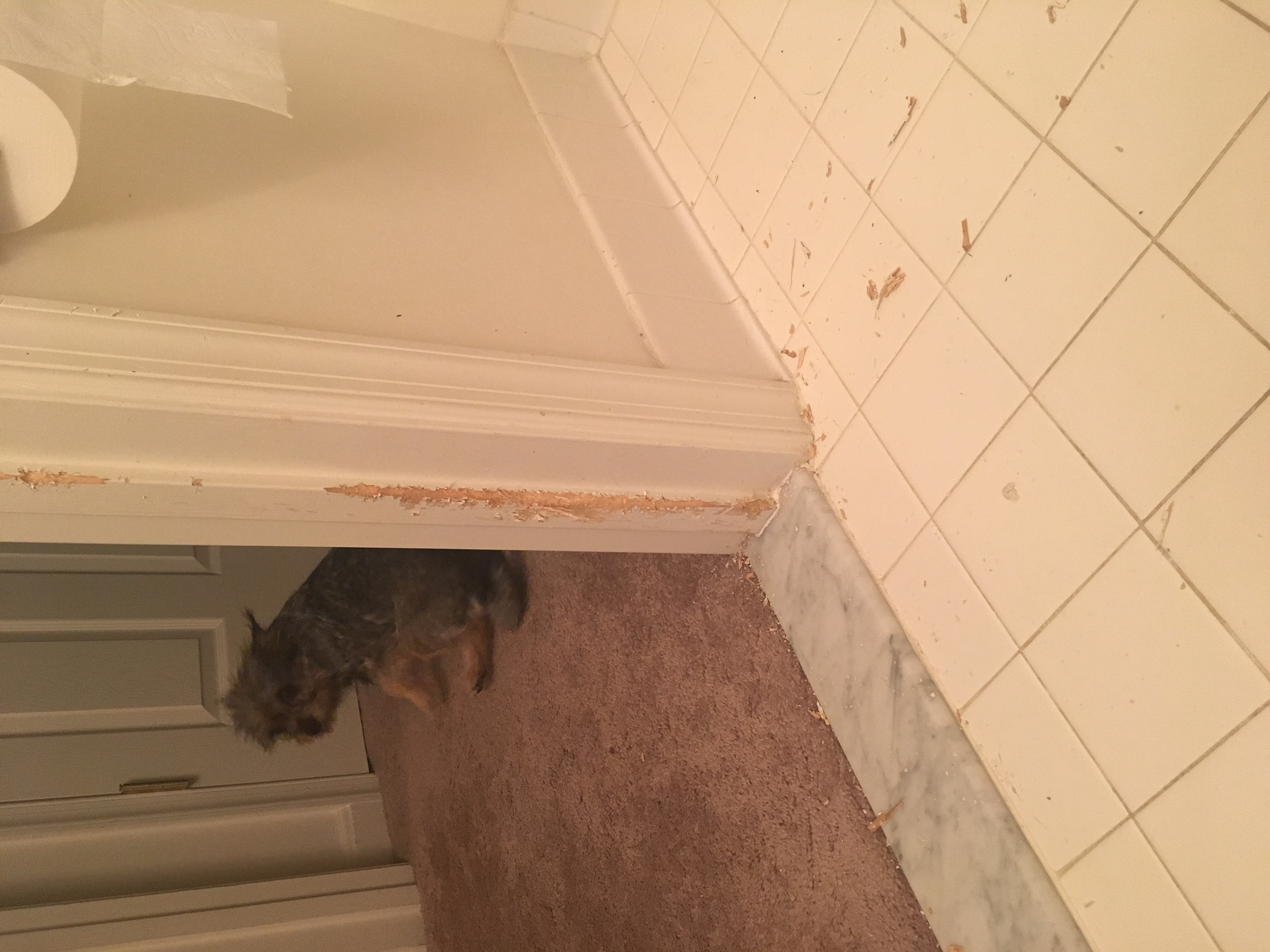 The patient damages door frames when not crated during owner absence.