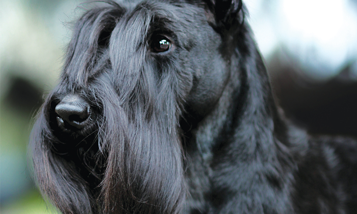 Top 5 Breed-Associated Biochemical Abnormalities