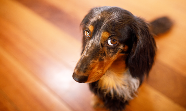 Prevalence of Problematic Behaviors in Dogs