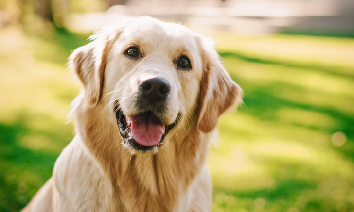 Screening Dogs for Hip Dysplasia