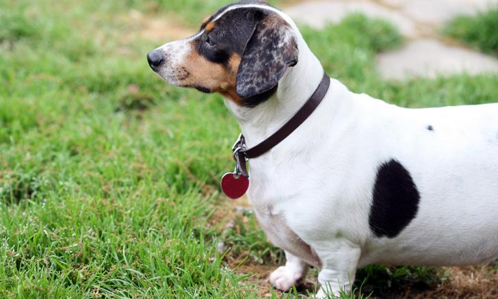 Parasite Risk in Dog Parks