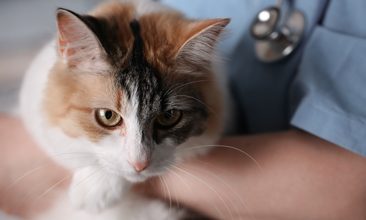 The Gentling Effect on Cats