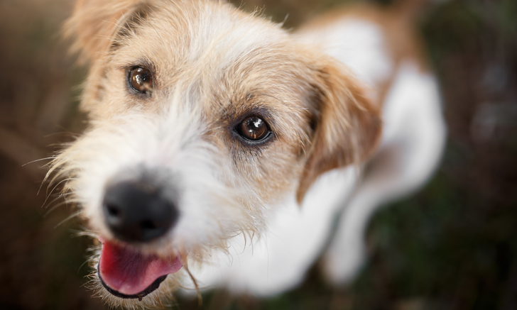 Effect of Dental Chews on Canine Plaque Microbiota