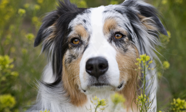 Top 5 Breed-Specific Considerations to Avoid Adverse Drug Effects