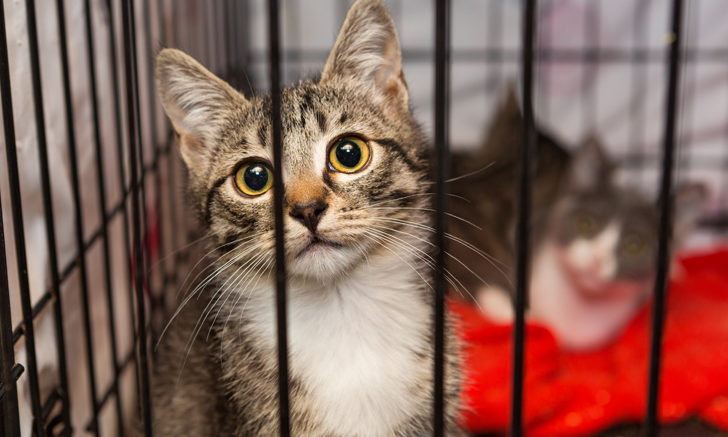 Behavior Problems in Adopted Cats & Dogs