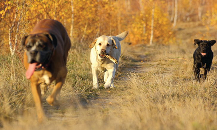 <em>Brucella canis </em>in Dogs from South Dakota Reservations
