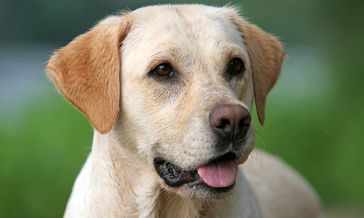 Proteinuria in Dogs