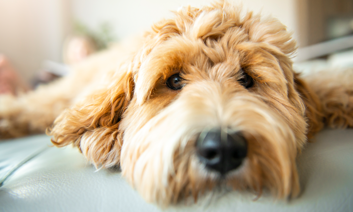Acute on Chronic Kidney Disease in Dogs: Prognosis & Survival