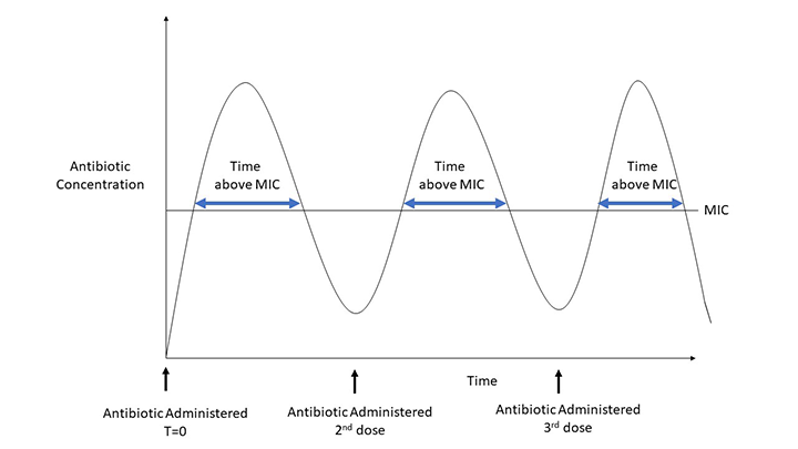 The efficacy of time-dependent antibiotics is based on the total time the antibiotic concentration is above MIC, thus increased frequency of administration improves effectiveness.