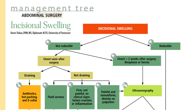 Abdominal Surgery: Incisional Swelling
