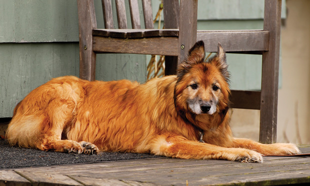 Treating Canine Osteoarthritis