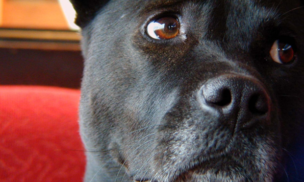How to Recognize and Treat Anxious Dogs and Cats