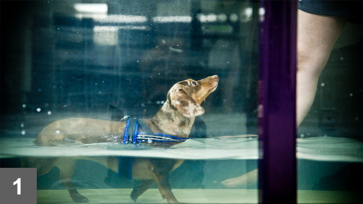 Because underwater treadmill walking has little impact on the joints, it can benefit dogs affected by orthopedic and neurologic conditions.