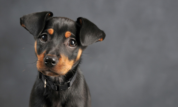 The Case: Puppy with Parvovirus Infection
