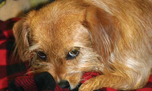 Canine Parvovirus Exposure