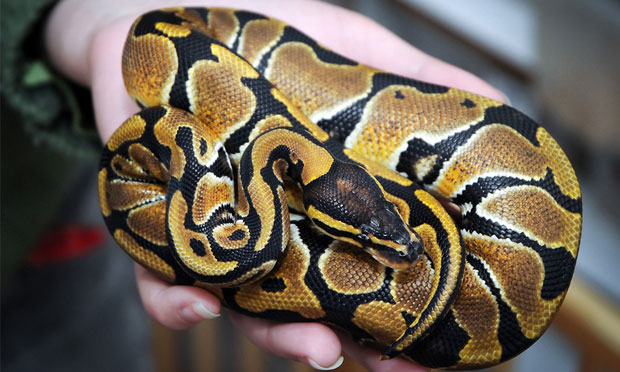 Exotic Pet Ownership: Responsible or Not?