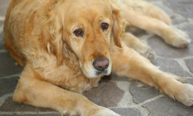 Educating Clients about Arthritis in Pets