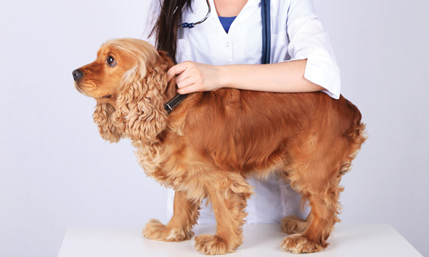 Companion Animals as Sentinels for Emerging Diseases