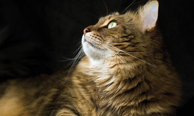 Toxoplasmosis & Tapeworms: Busting the Myths of Zoonoses