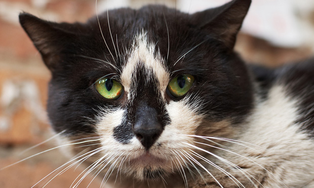Keep Cats Indoors—Wildlife Will Thank You