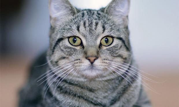 Top 5 Feline Environmental Needs