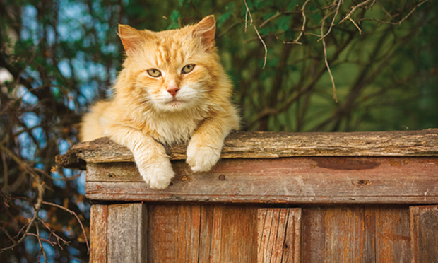 "Top 5 Causes of ""ADR"" in Older Cats"