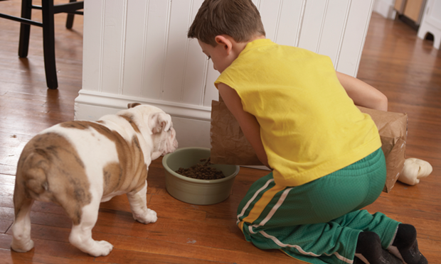 Top 5 Pet Food–Associated Illnesses