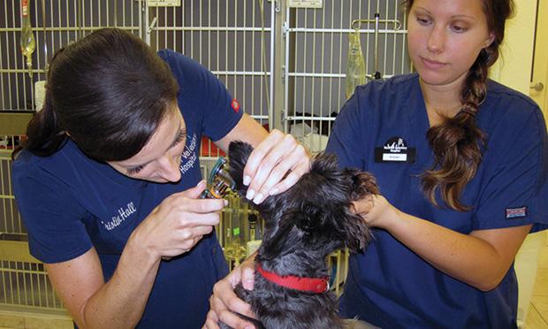 Physical Examination: The Cornerstone of Veterinary Medicine