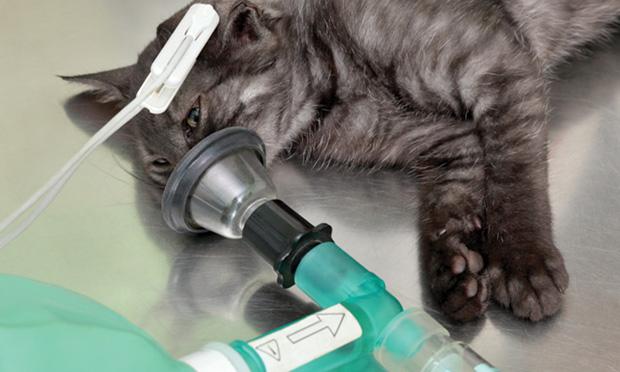 Anesthesia in Hepatic Disease