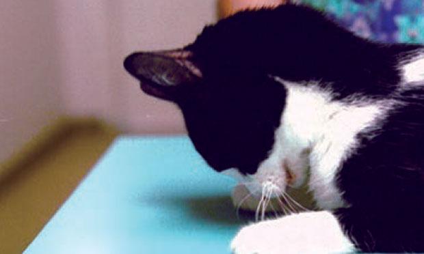 cashmere cat, major lazer, tory lanez - miss you